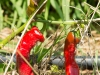ncphotography-20130704_0